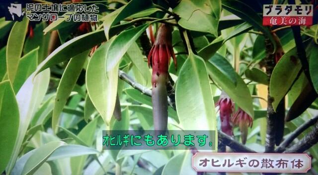 f:id:morifumikirikita319:20170401220233j:image