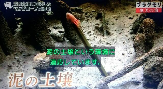 f:id:morifumikirikita319:20170401220333j:image