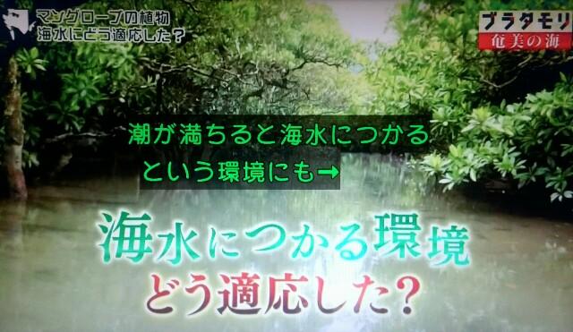 f:id:morifumikirikita319:20170401220407j:image