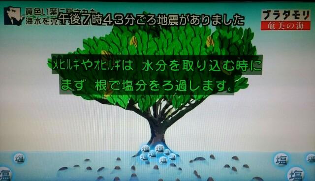 f:id:morifumikirikita319:20170401224540j:image