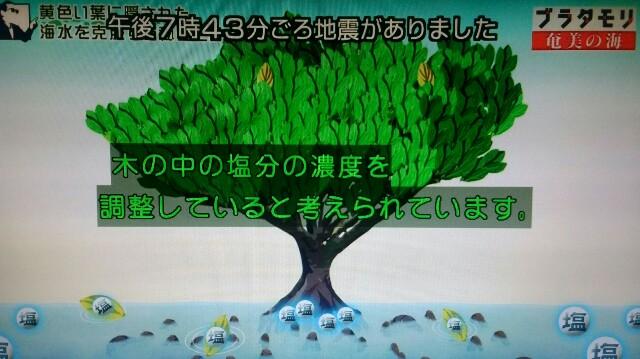 f:id:morifumikirikita319:20170401224606j:image