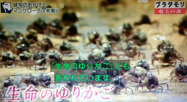 f:id:morifumikirikita319:20170401225448j:image