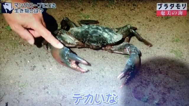 f:id:morifumikirikita319:20170401230234j:image