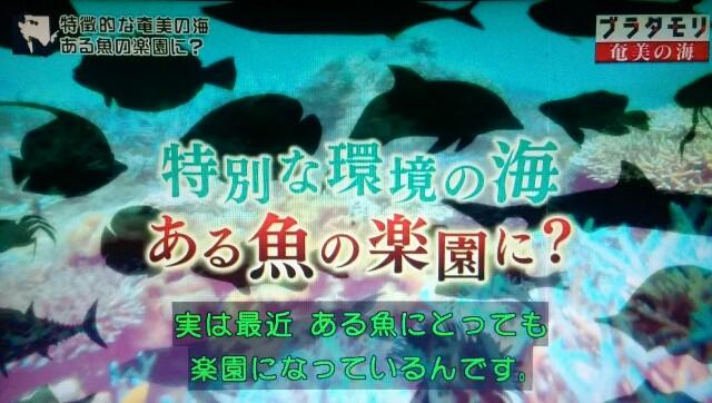 f:id:morifumikirikita319:20170402001053j:image