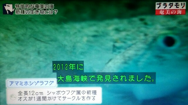 f:id:morifumikirikita319:20170402001113j:image