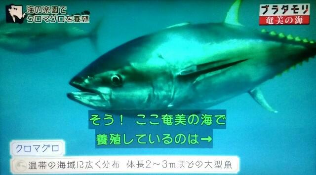 f:id:morifumikirikita319:20170402062355j:image