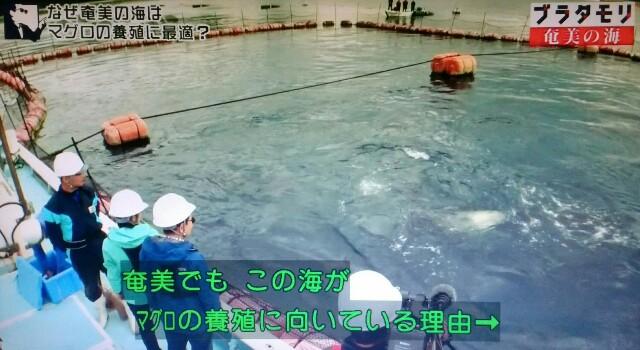 f:id:morifumikirikita319:20170402074743j:image