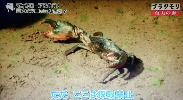 f:id:morifumikirikita319:20170402083359j:image