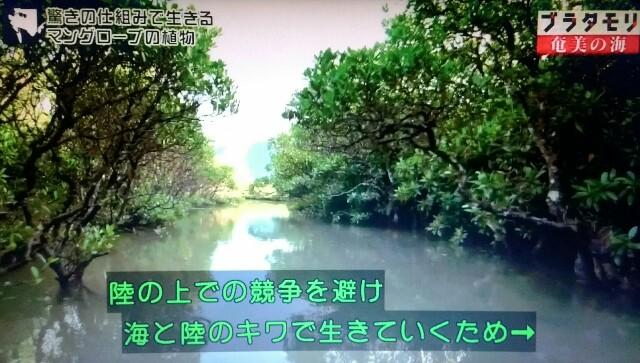 f:id:morifumikirikita319:20170402113003j:image
