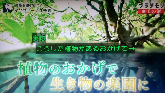f:id:morifumikirikita319:20170402122609j:image