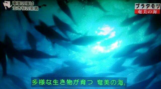 f:id:morifumikirikita319:20170402135447j:image