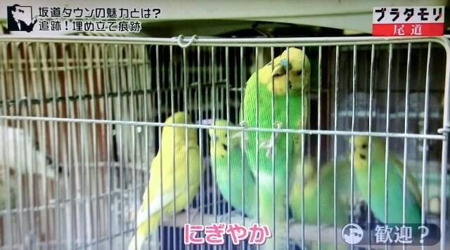 f:id:morifumikirikita319:20170520233311j:image
