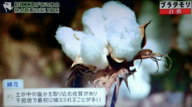 f:id:morifumikirikita319:20170603232240j:image