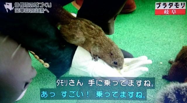 f:id:morifumikirikita319:20171203010803j:image