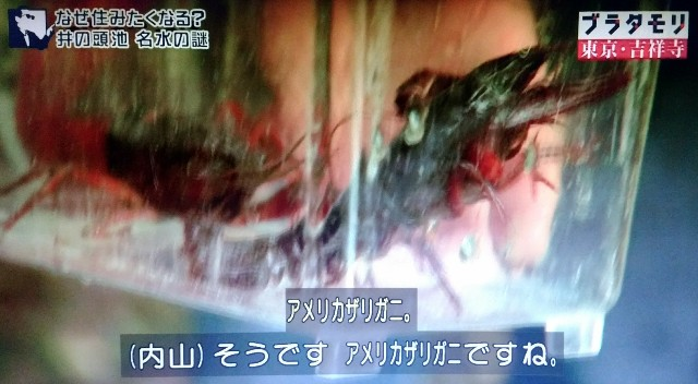 f:id:morifumikirikita319:20171224083729j:image