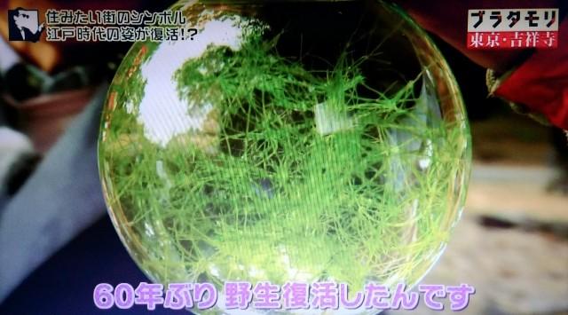 f:id:morifumikirikita319:20171224085059j:image
