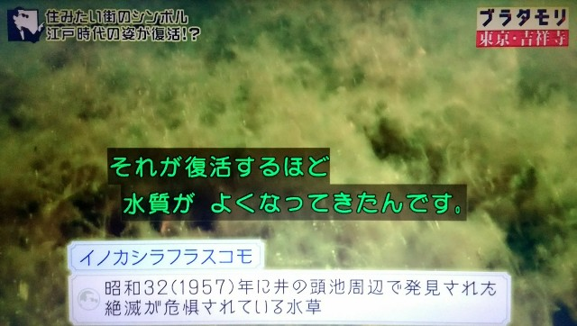 f:id:morifumikirikita319:20171224090223j:image