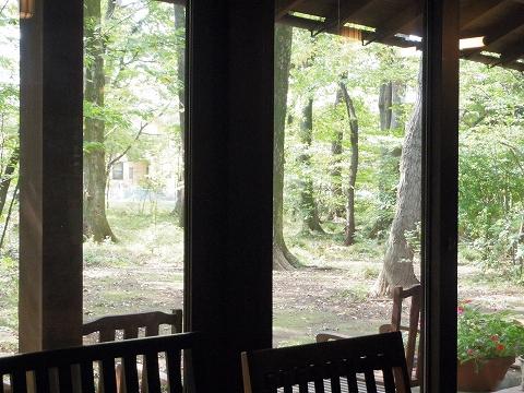 埼玉県所沢市若狭にあるイタリア料理のお店「PIZZERIA 武蔵野山居」店内からの眺め