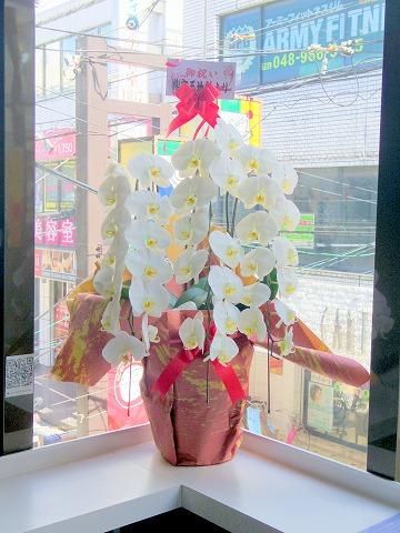埼玉県越谷市弥生町にあるタピオカ専門店「伎里茶(ジリシャ)」店内