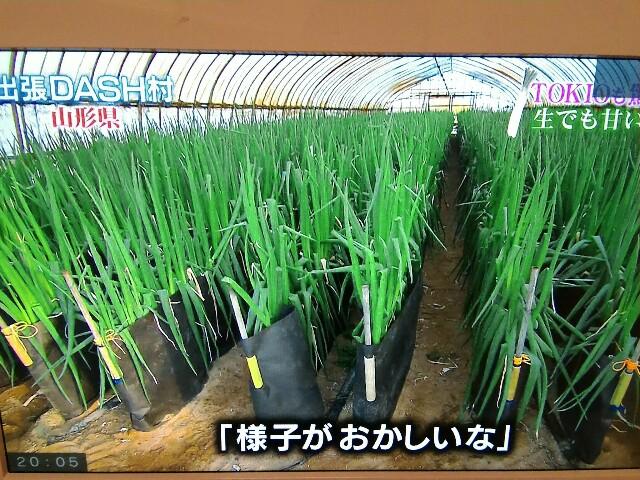 f:id:morihirohate:20170205200553j:image