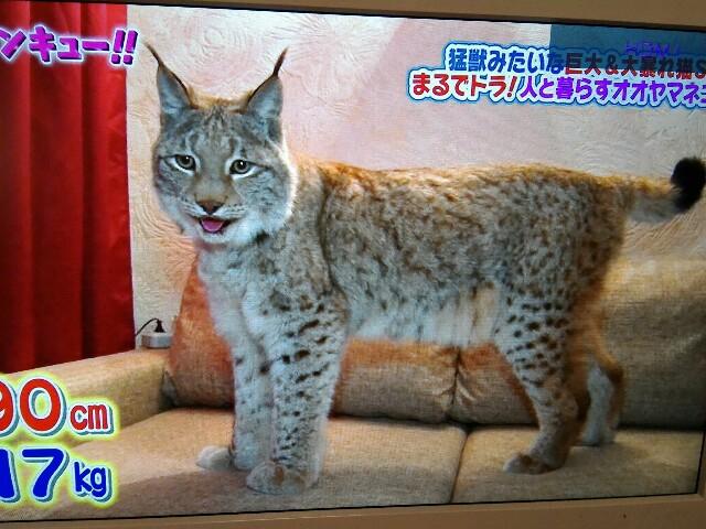 f:id:morihirohate:20170208222003j:image