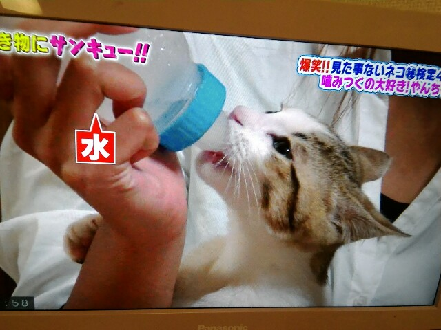 f:id:morihirohate:20170315220945j:image