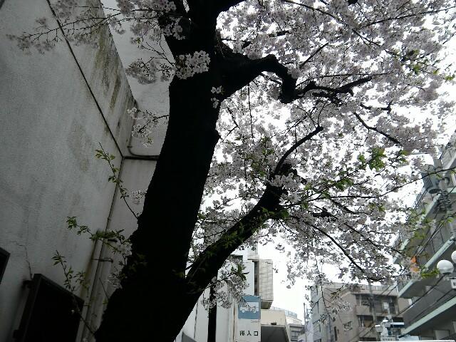 f:id:morihirohate:20170408194623j:image