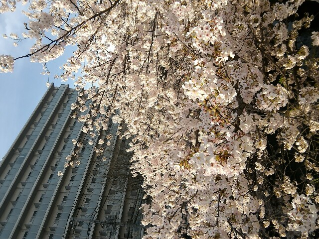 f:id:morihirohate:20170413212526j:image