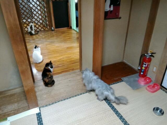 f:id:morihirohate:20170415212209j:image