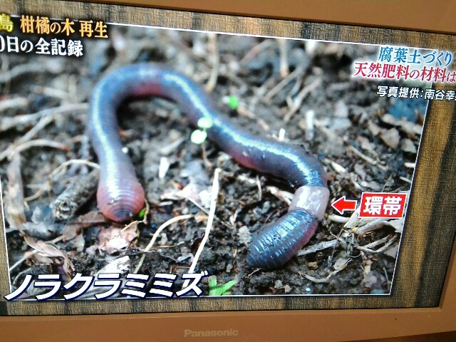 f:id:morihirohate:20170416211028j:image