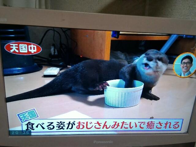 f:id:morihirohate:20170427204133j:image