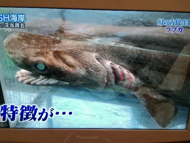 f:id:morihirohate:20170514215315j:image