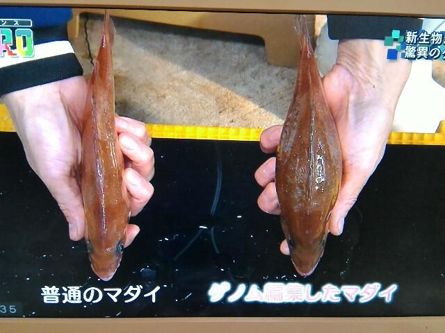f:id:morihirohate:20170516203612j:image