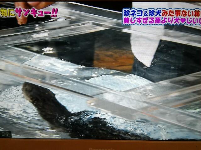 f:id:morihirohate:20170618214013j:image