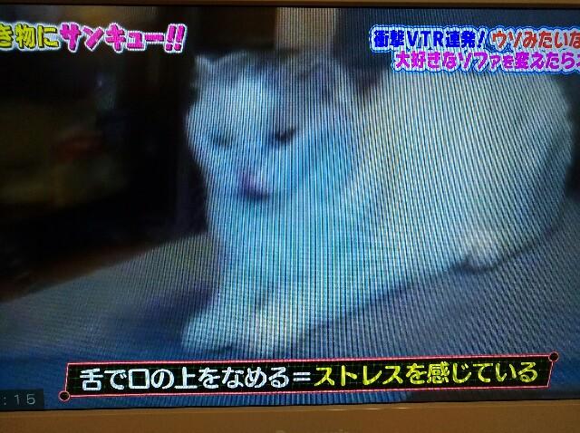 f:id:morihirohate:20170625000004j:image