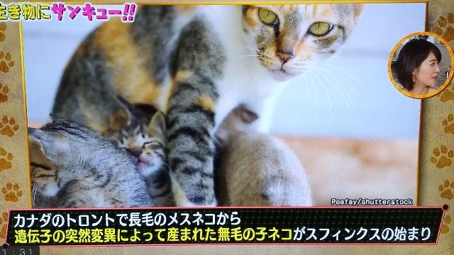 f:id:morihirohate:20170721161151j:image