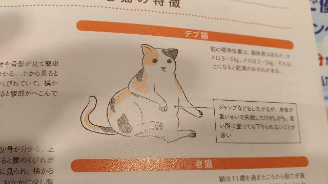 f:id:morihirohate:20170804002256j:image