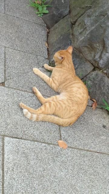 f:id:morihirohate:20170805065834j:image