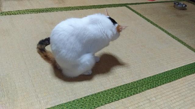 f:id:morihirohate:20170807093044j:image