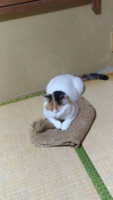 f:id:morihirohate:20181006123107j:image