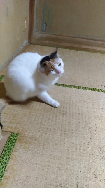f:id:morihirohate:20181006123448j:image