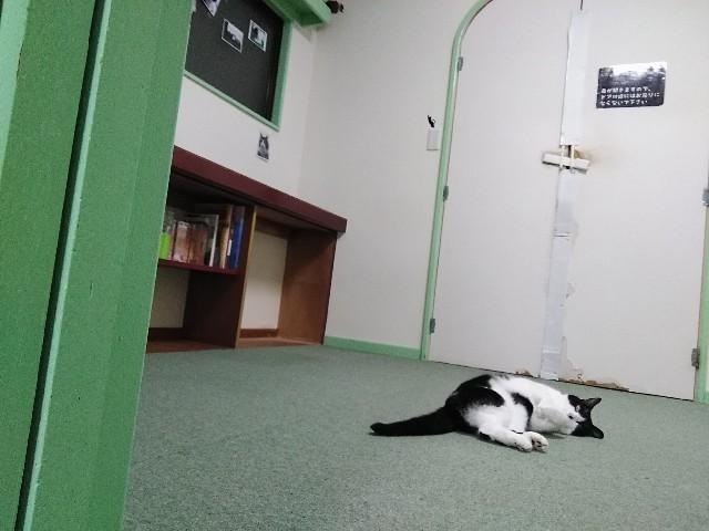 f:id:morihirohate:20181018213716j:image