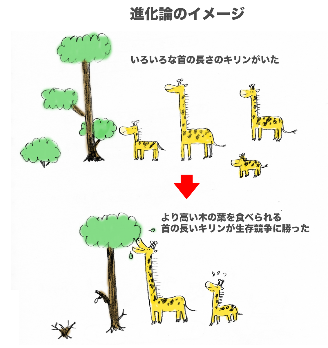 f:id:morika-wa:20200319030042p:plain