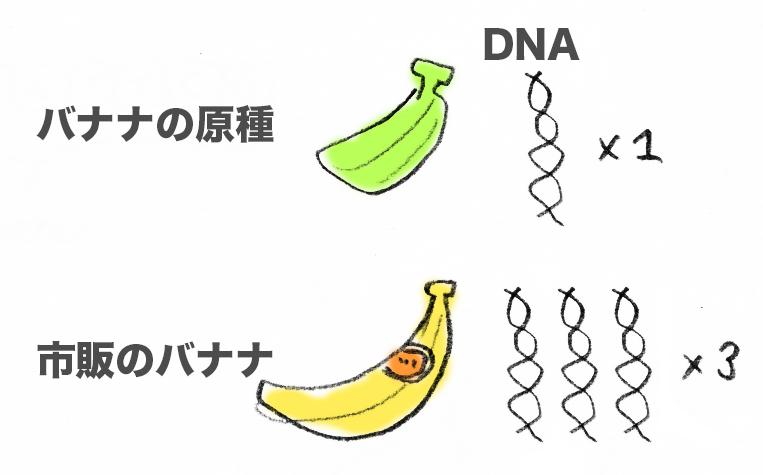 f:id:morika-wa:20200319031906p:plain