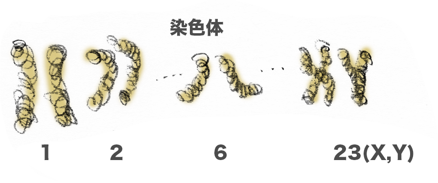 f:id:morika-wa:20200319032317p:plain