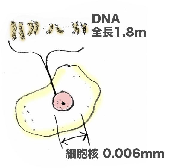 f:id:morika-wa:20200319032402p:plain