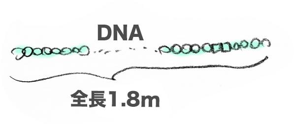 f:id:morika-wa:20200319032652p:plain