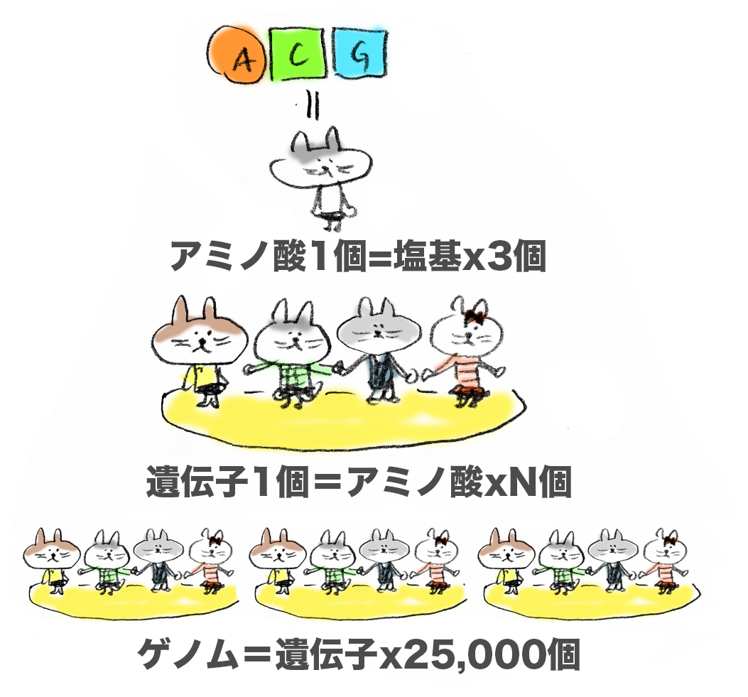 f:id:morika-wa:20200319032850p:plain