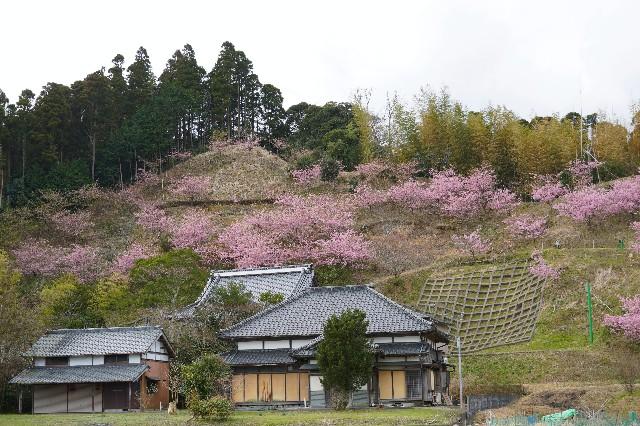 f:id:moriken-isumi:20200220164426j:image