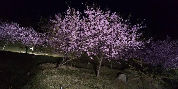 f:id:moriken-isumi:20200222045337j:image
